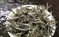 白茶有几种名称你了解吗