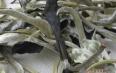 白茶的功能性成分及其作用简述