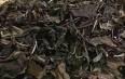 饮用白茶的功效与作用包括