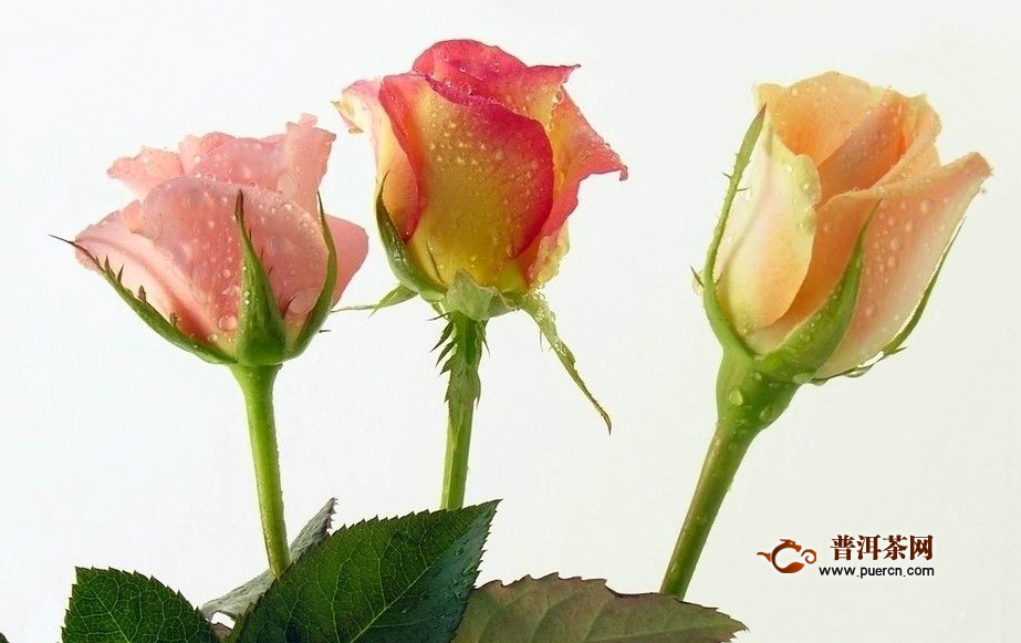 新鲜玫瑰花茶的泡法