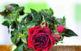 玫瑰花茶一次泡几朵