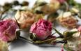 常饮用玫瑰花茶能调理身体是不是