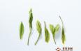 贵州都匀毛尖绿茶怎么喝