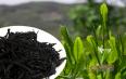 优质黑茶具备哪些特征